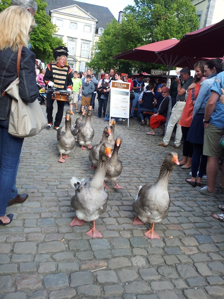 Die Gänse auf dem Historischen Jahrmarkt in Kornelimünster