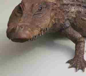 Krokodil aus Stein