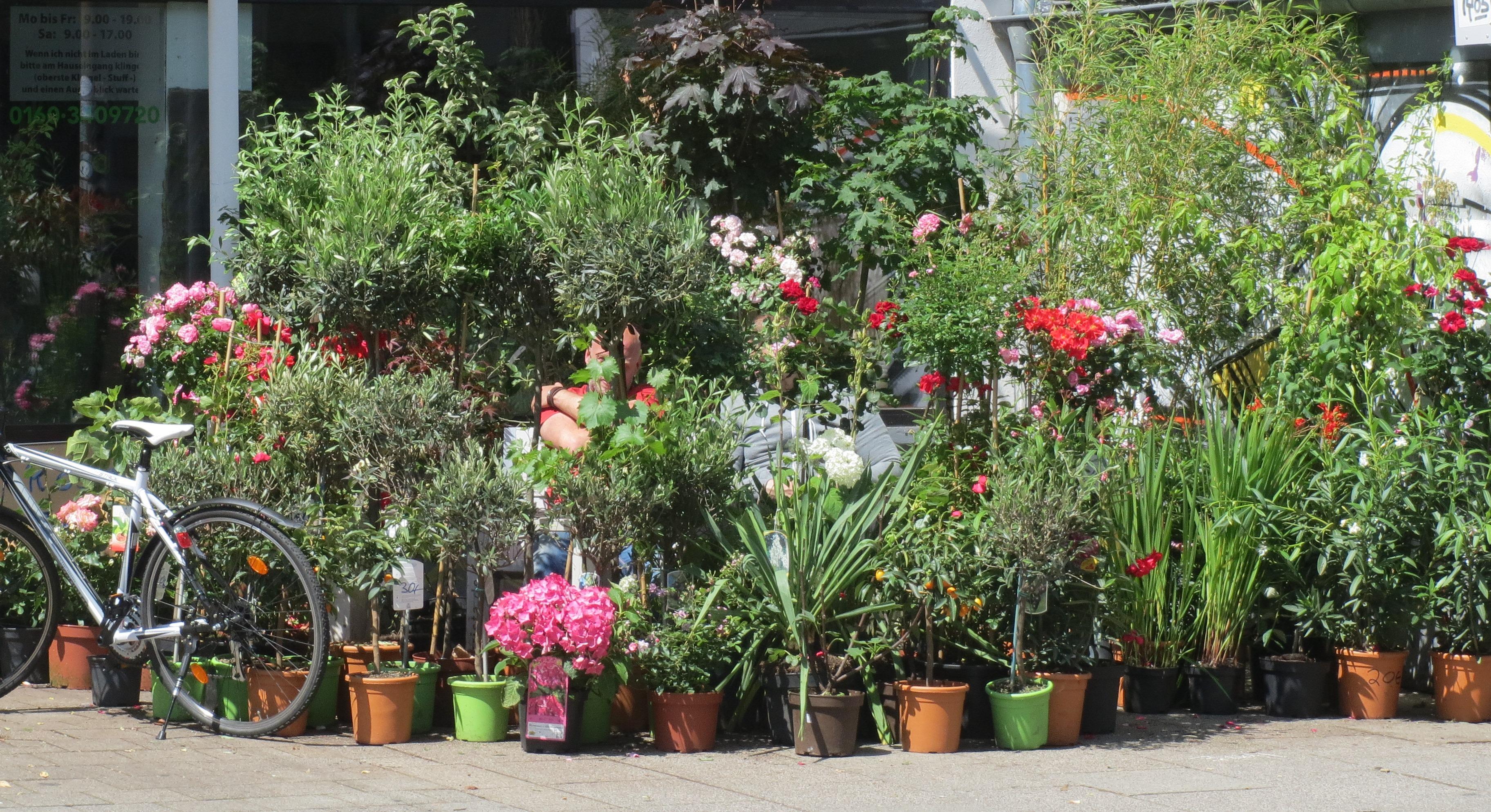 viele viele Blumentöpfe vor einem Laden