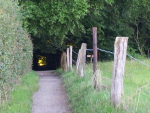 Weg durch den dunklen Wald