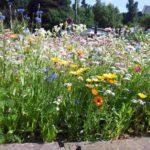 Eine bunte Sommerblumenwiese