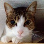 Eine Katze als Sympathieträger